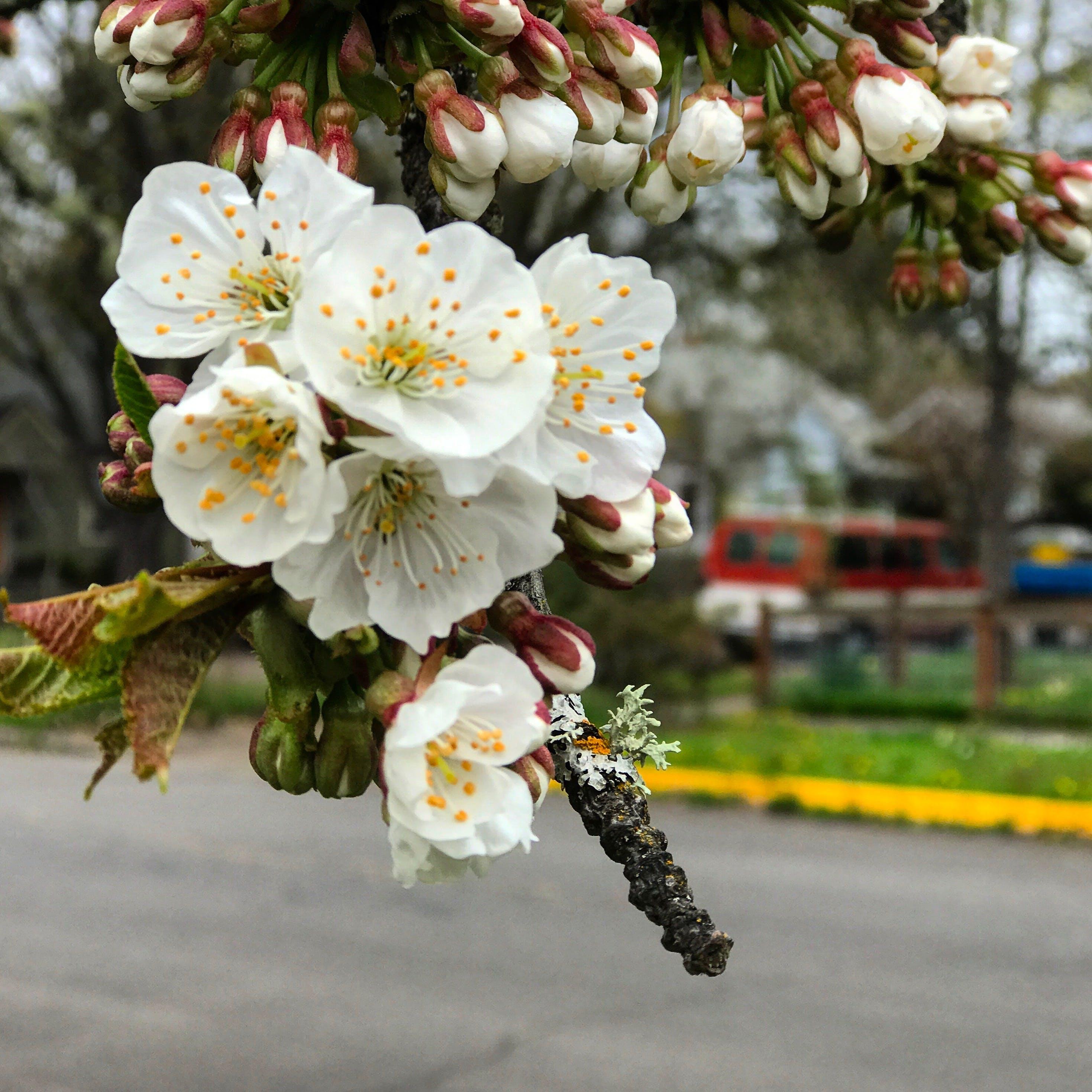 Základová fotografie zdarma na téma květiny, kytka