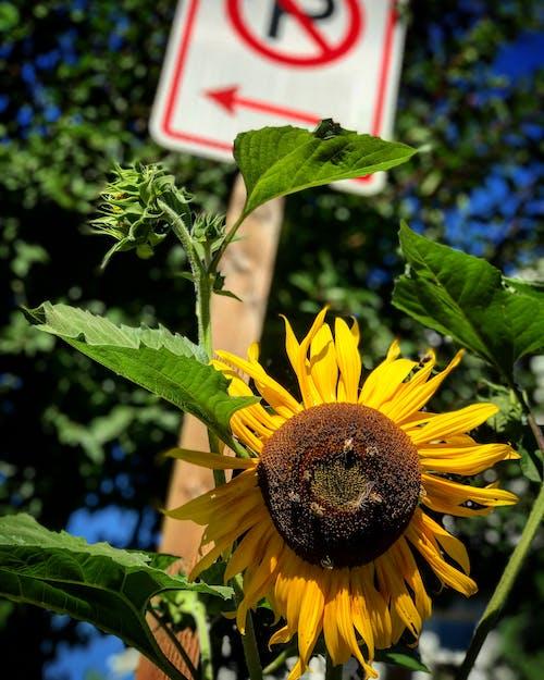 Gratis lagerfoto af bi, bier, blomst, blomster