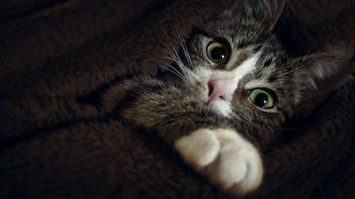 Gratis lagerfoto af dyr, dyrefotografering, huskat, kat