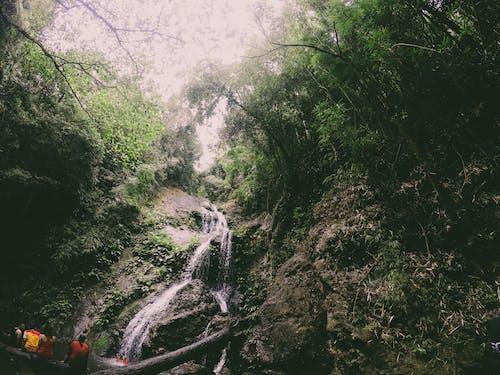 Fotobanka sbezplatnými fotkami na tému dažďový prales, džungľa, hora, idylický