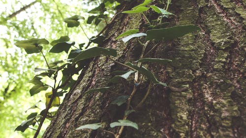 Free stock photo of bark, climber, forest, green