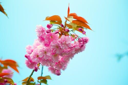 增長, 天性, 微妙, 植物群 的 免费素材照片