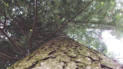 Foto d'estoc gratuïta de arbre, bosc, escorça, fotografia d'angle baix