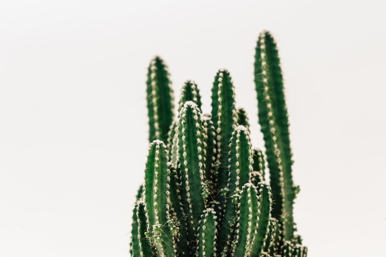 Close-Up Photography of Cactus