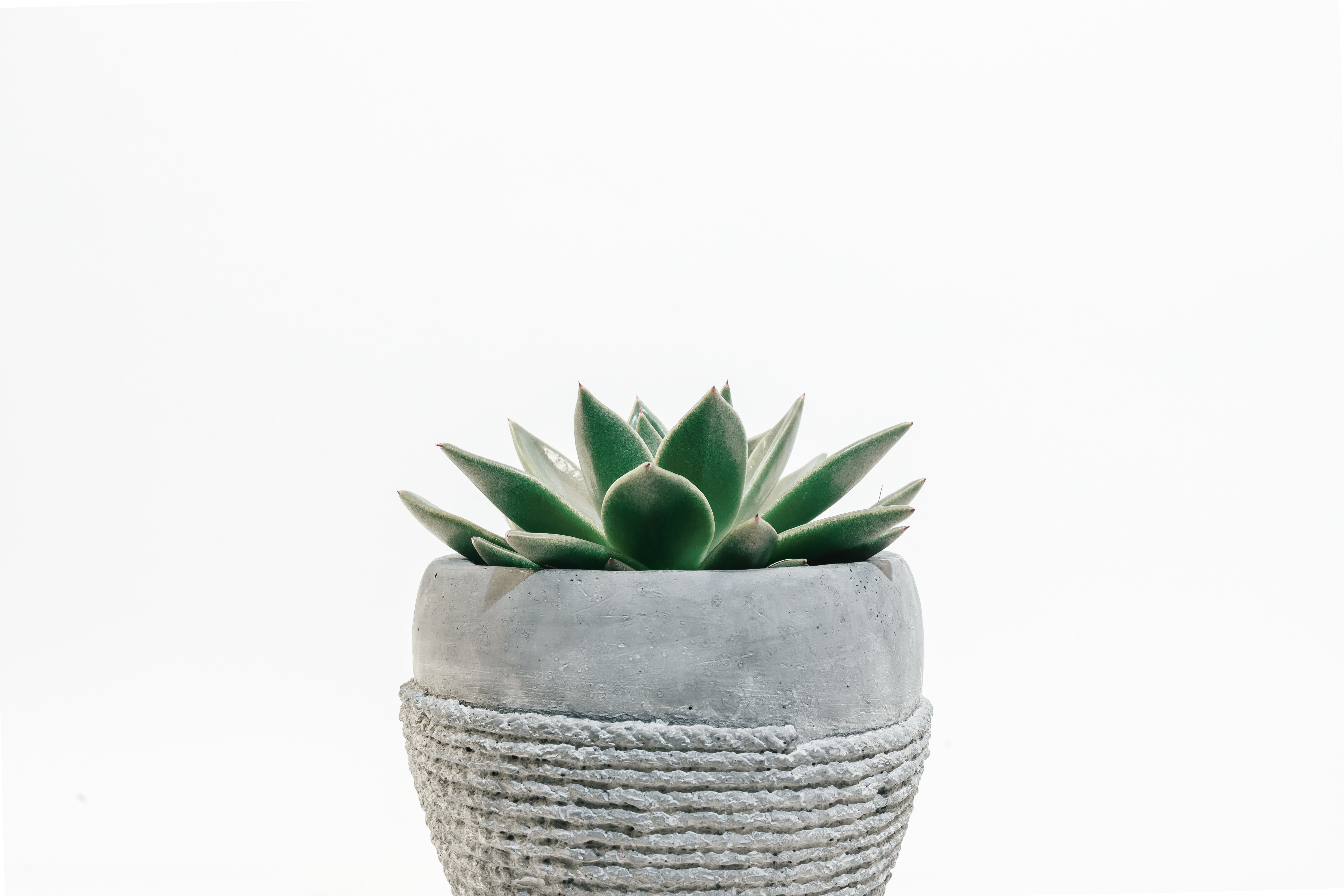 Photo of Plant on Pot
