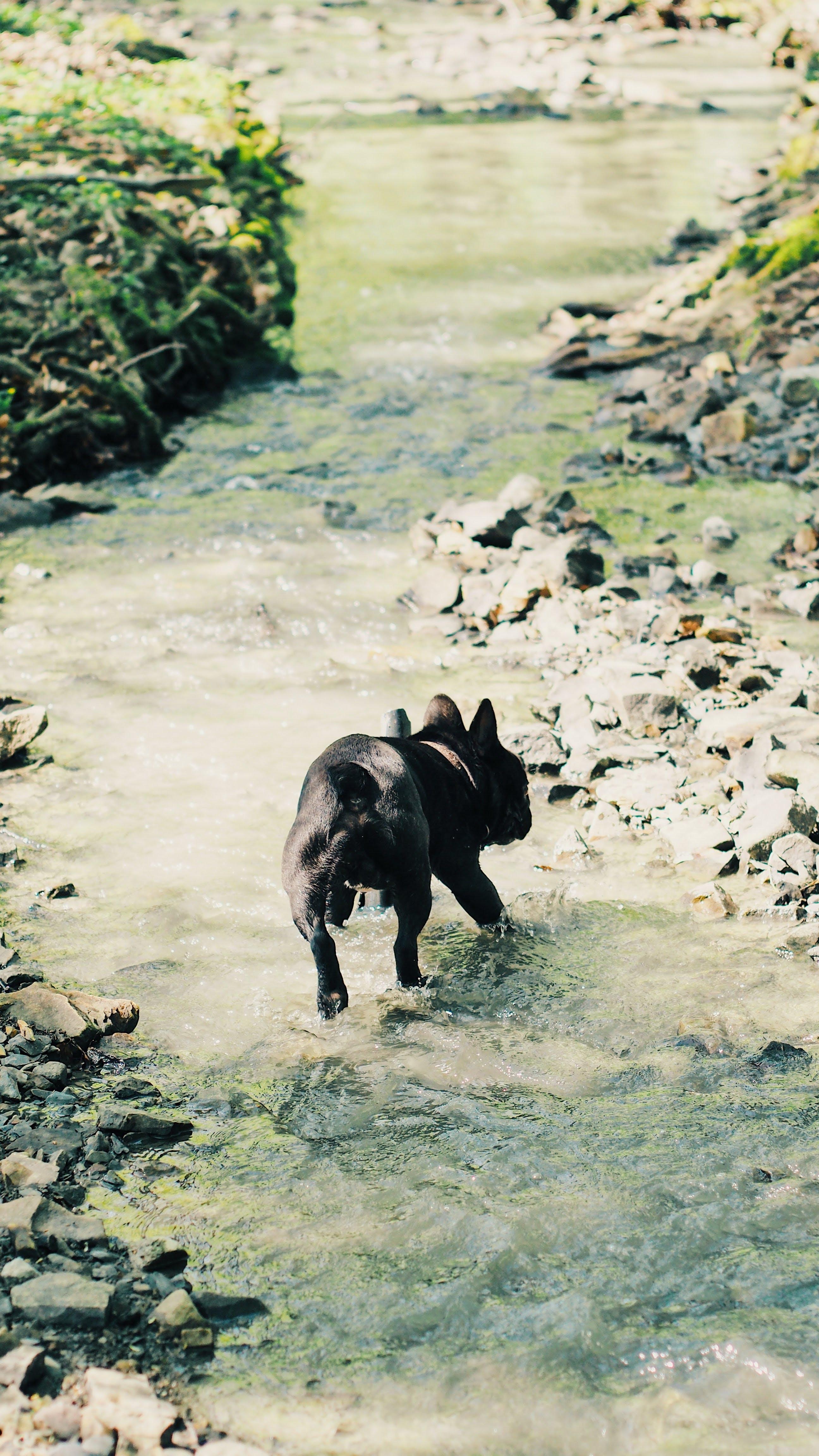 Photo of Dog Running on Stream