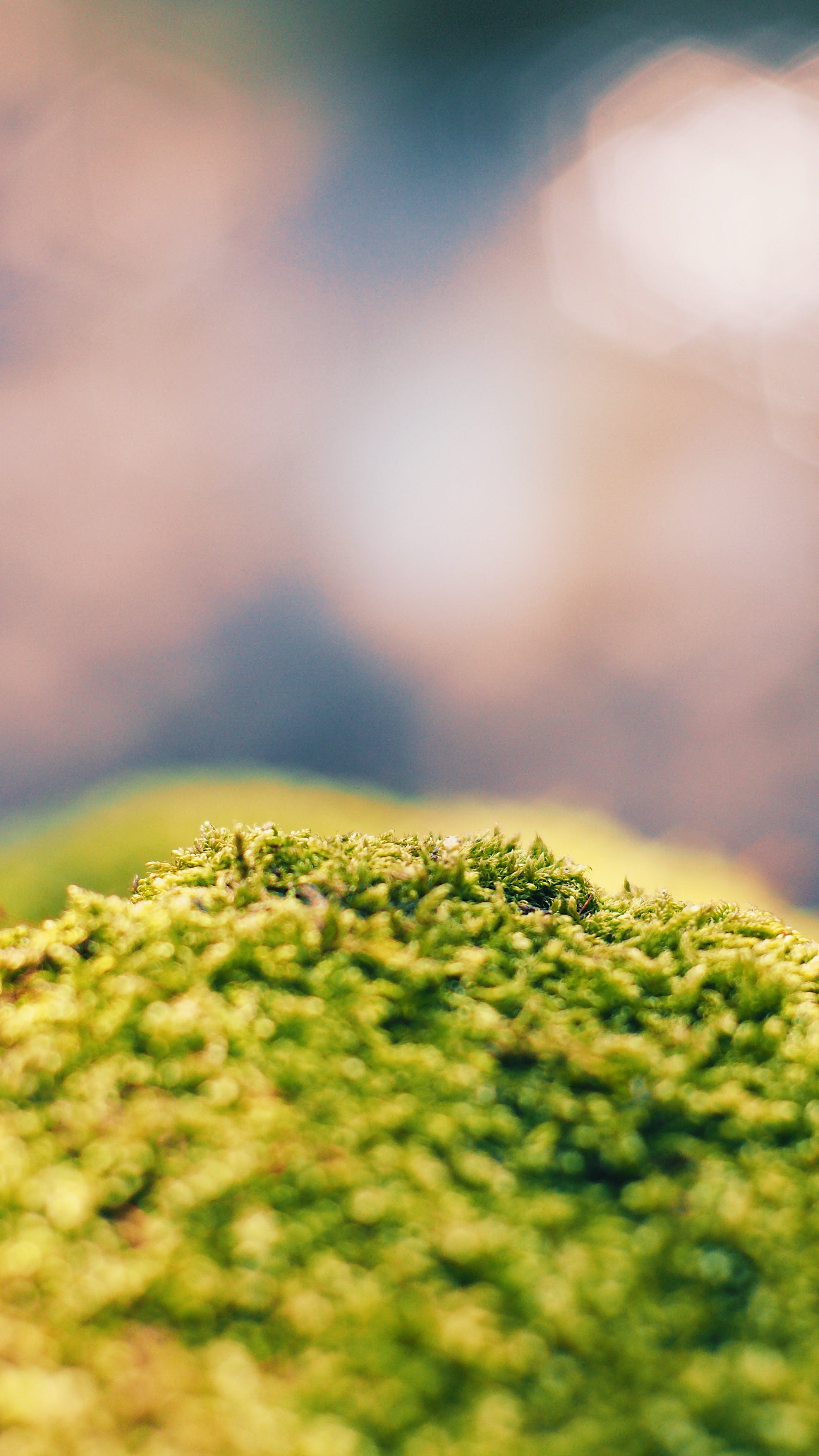 Close-up Photo of Green Algae