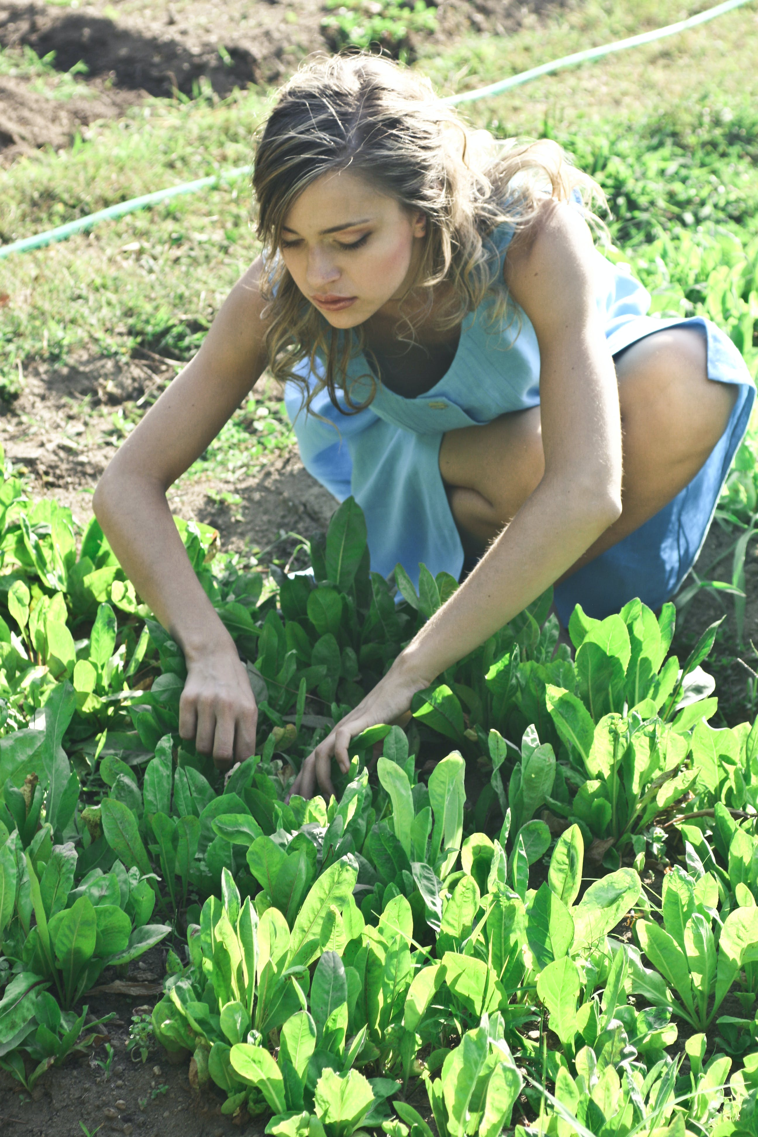 Photo of Woman Planting