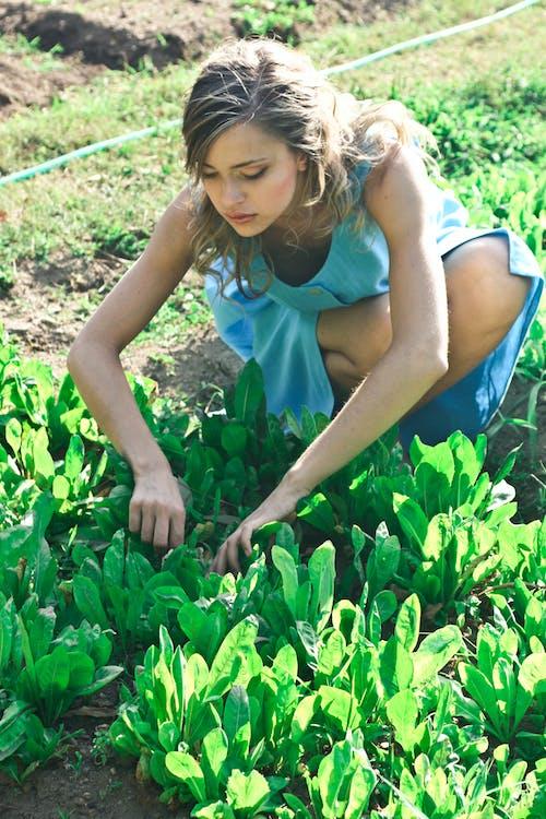 Foto Der Frau, Die Pflanzt