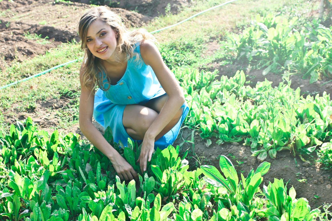 Photo of Woman Planting Vegetables