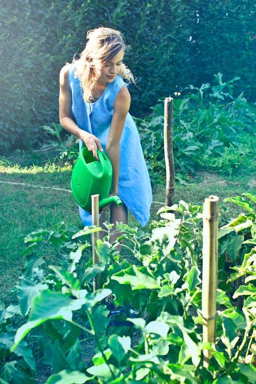 修剪花草, 噴壺, 增長, 夏天 的 免费素材照片