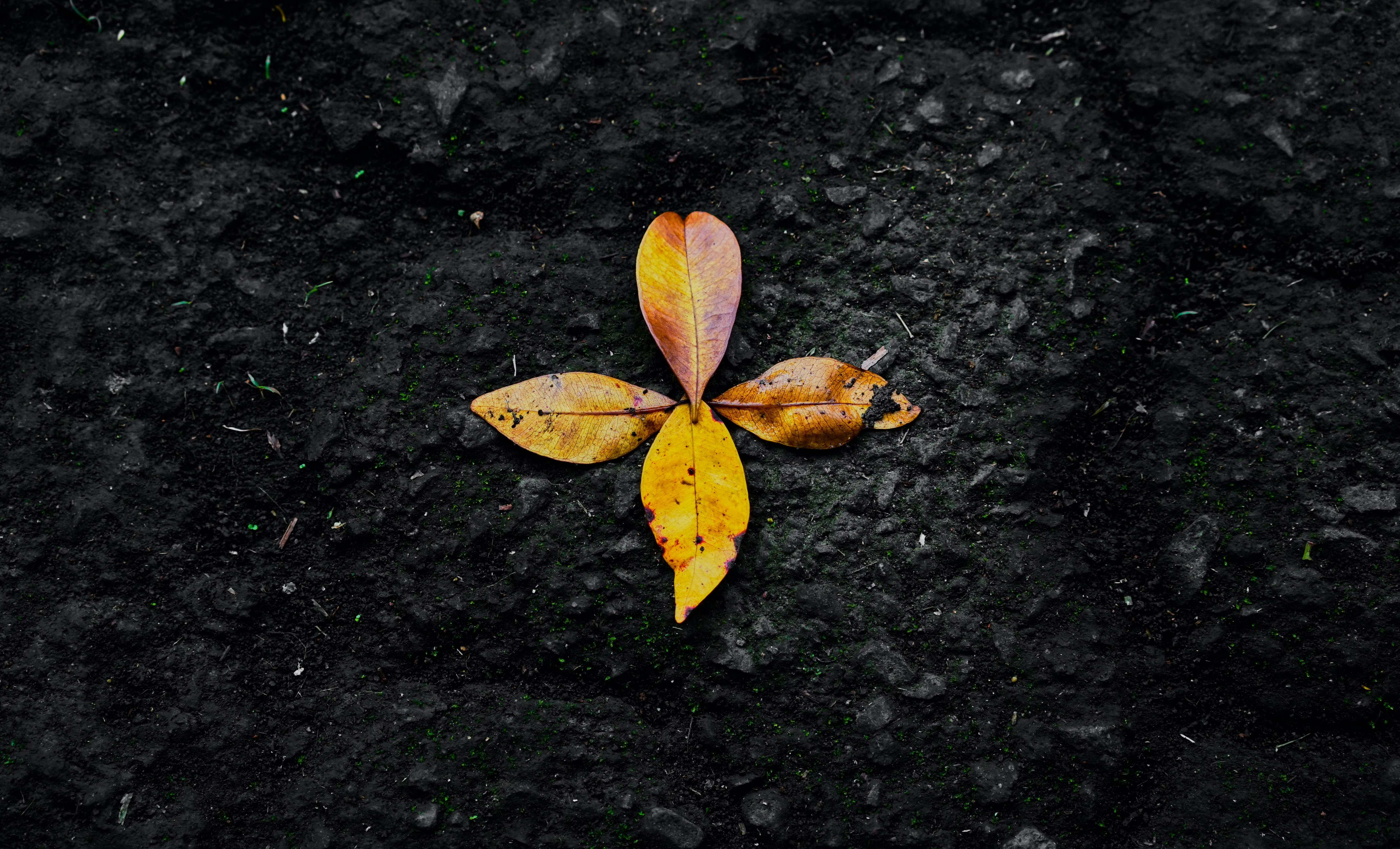 Photo of Dried Leaves on Ground