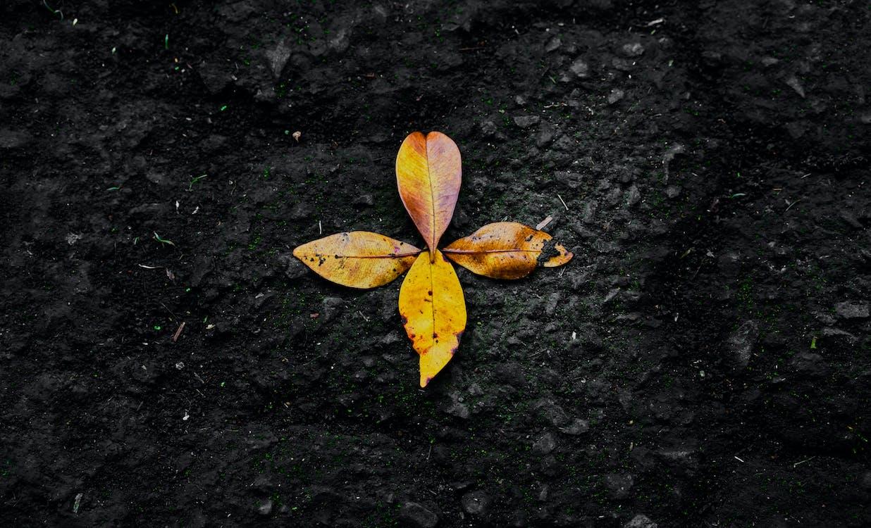 가을, 간, 나뭇잎