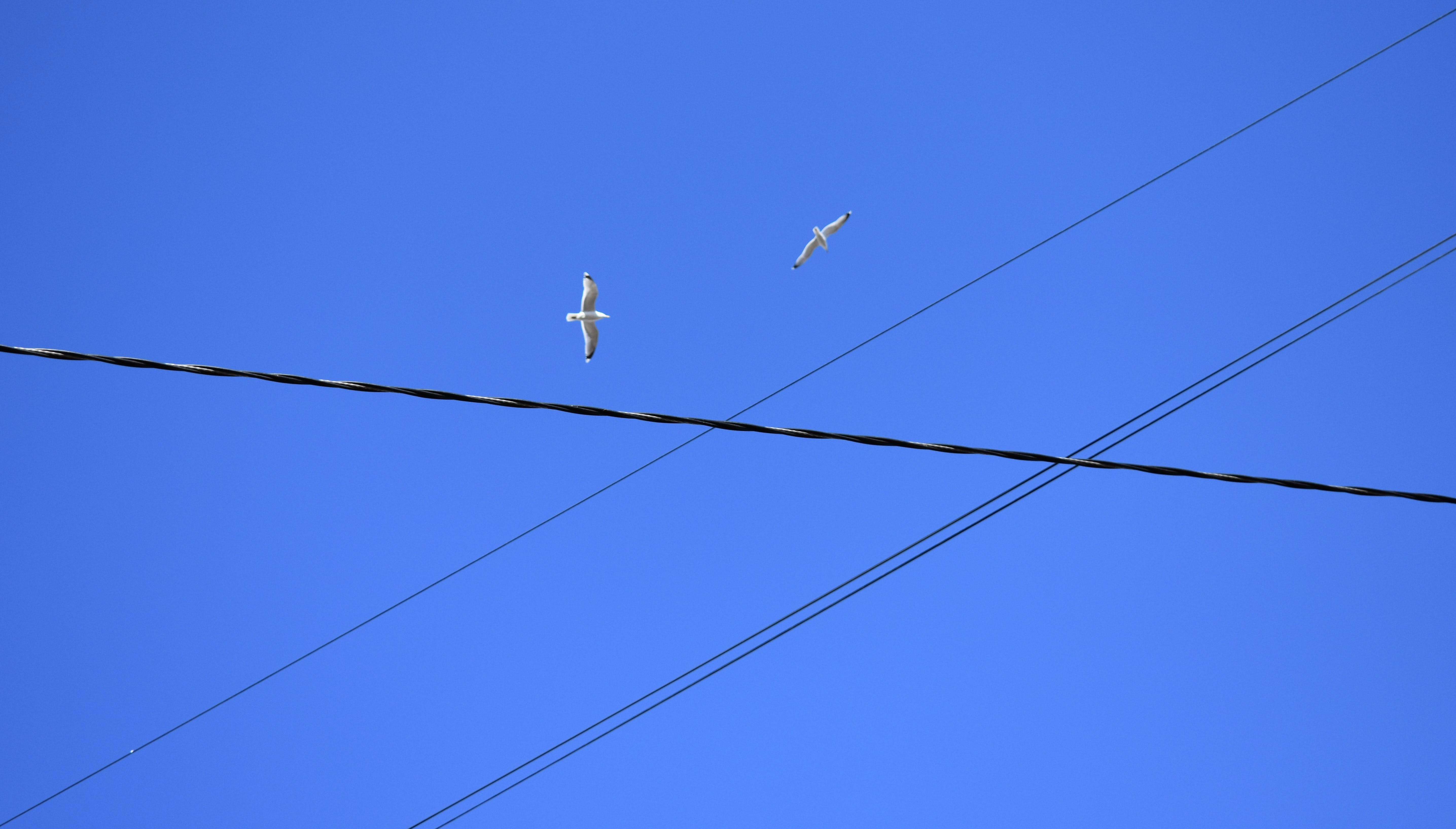 Free stock photo of blue sky, city sky, couple, electrical cables