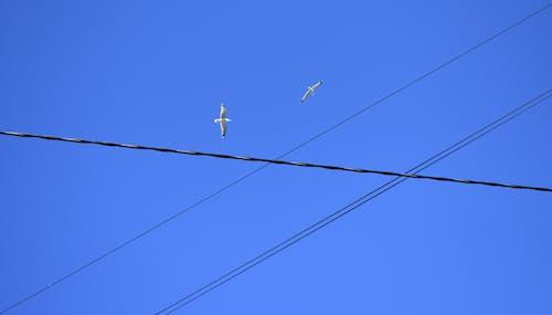 Kostenloses Stock Foto zu blauer himmel, flug, freiheit, möwe