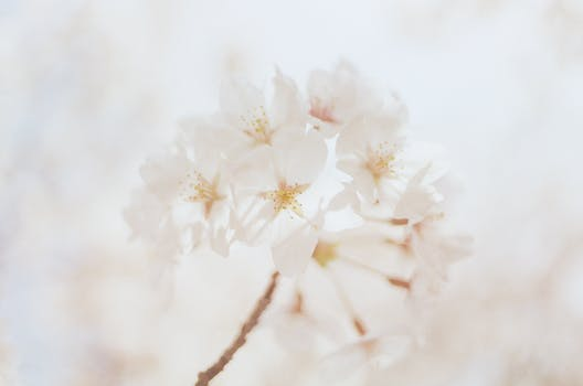 1000 beautiful white flowers photos pexels free stock photos close up photography of white flowers mightylinksfo