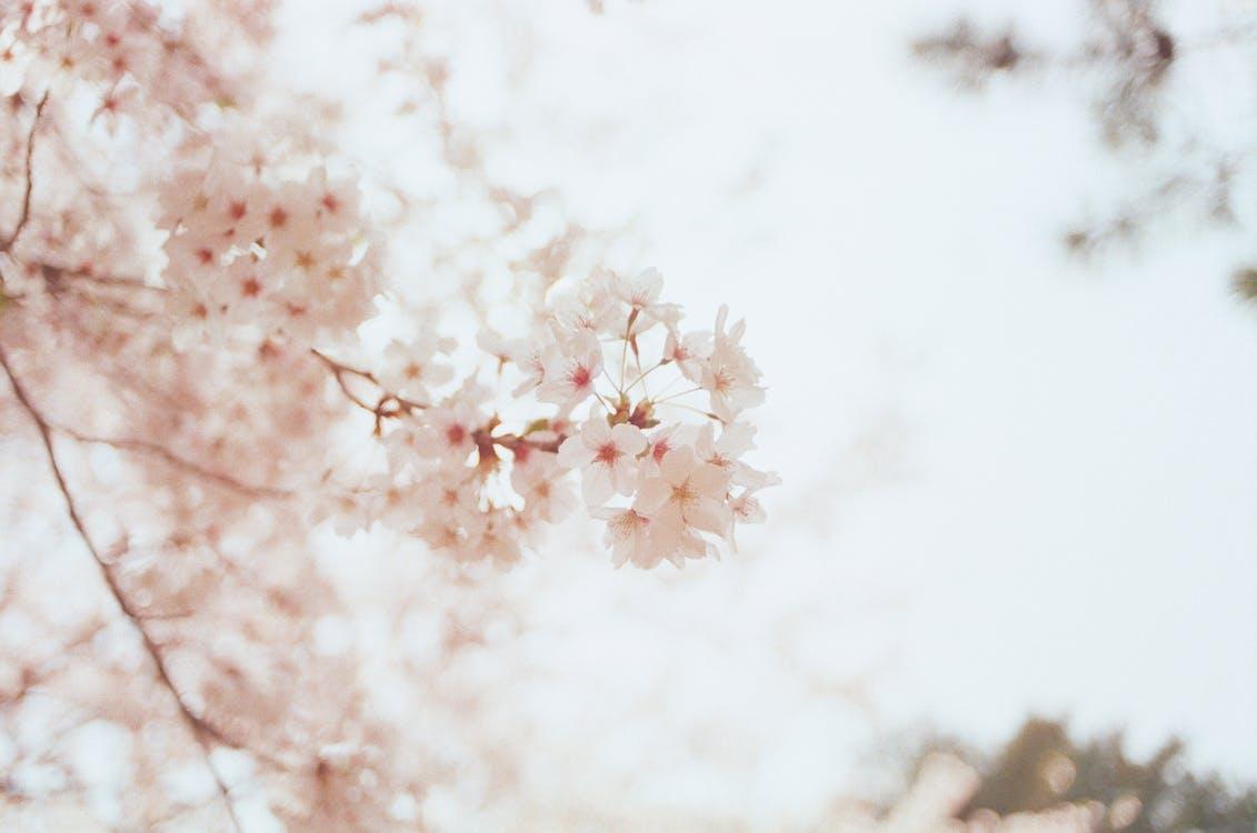 blomster, blomstrende, delikat