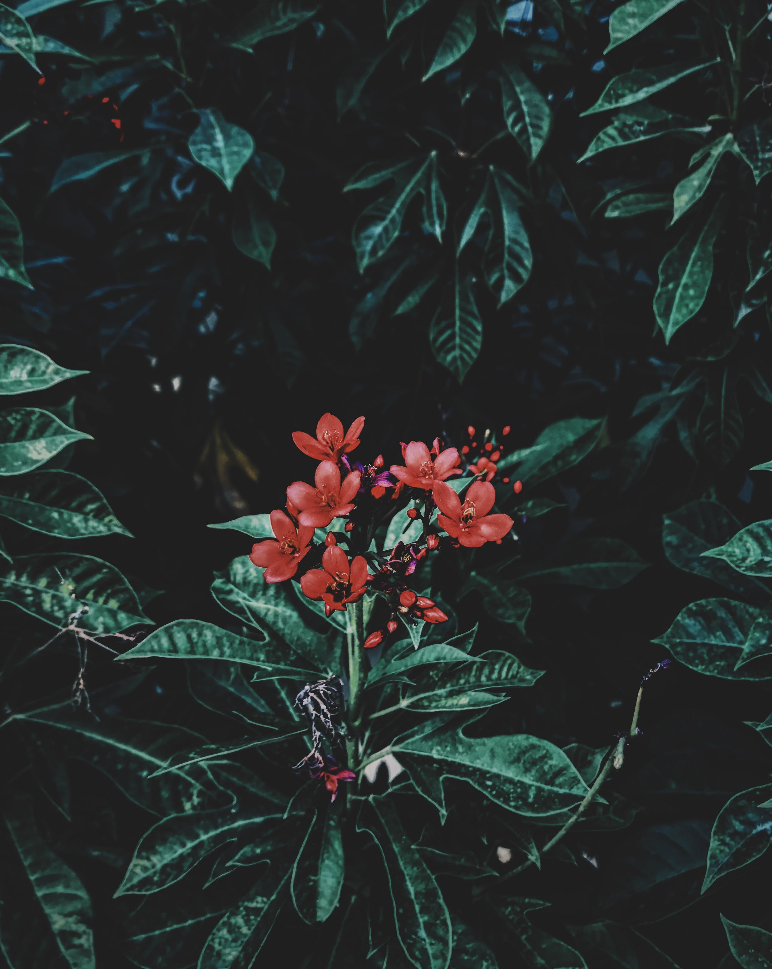 Photography of Red Flowers Near Leaves