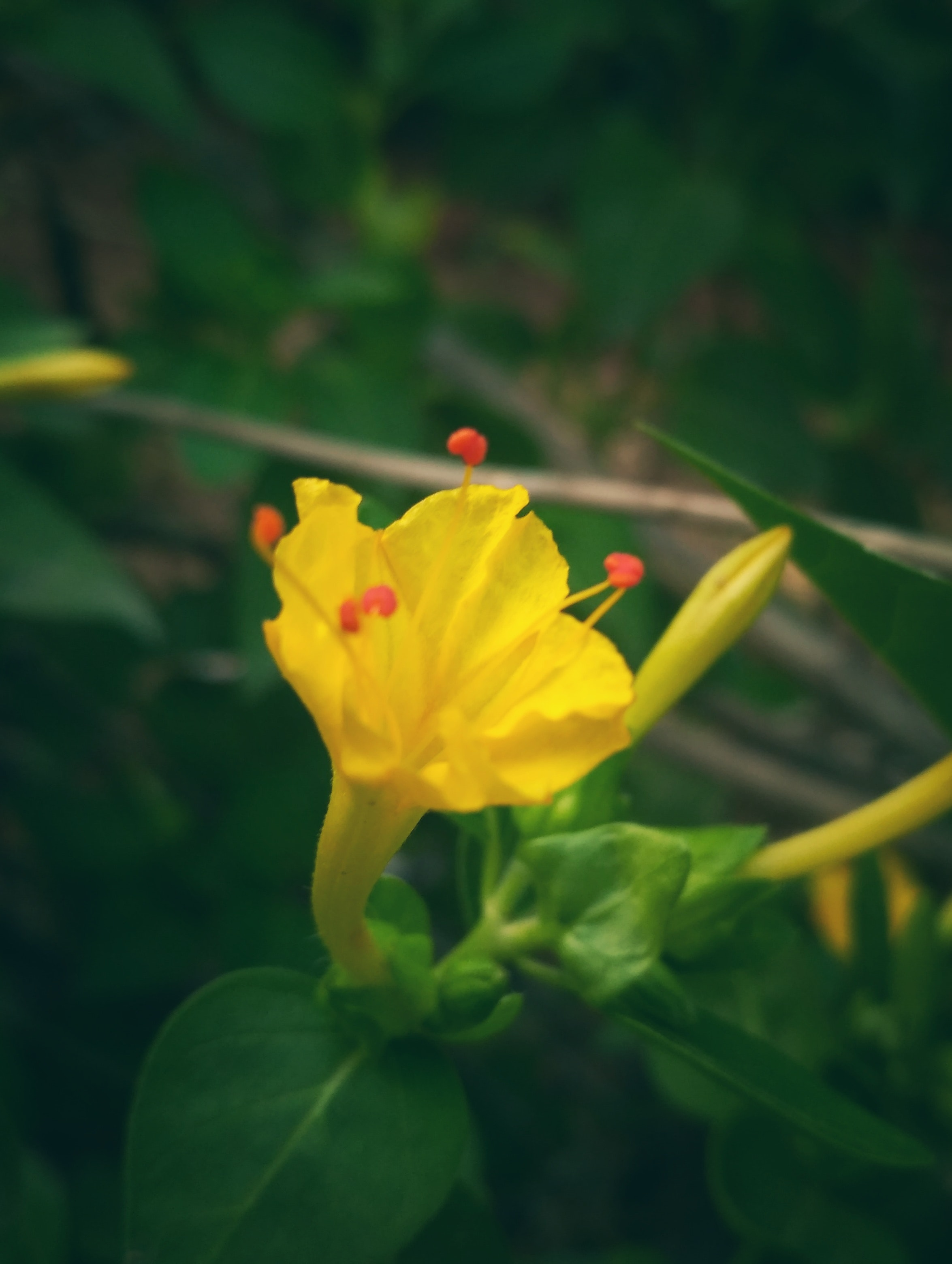 Free stock photo of dark green green leaf yellow flower mightylinksfo