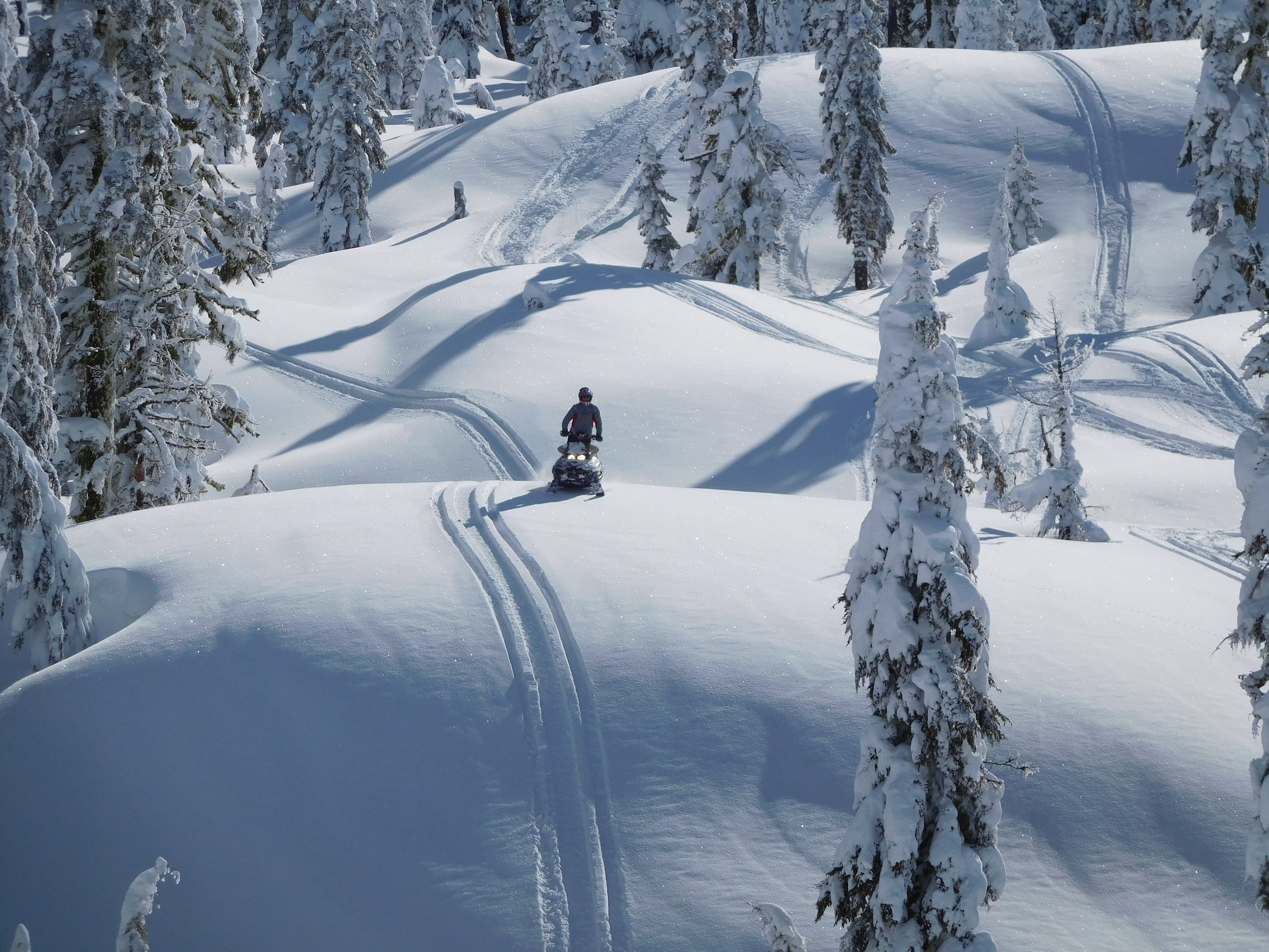 Person Riding Snowmobile Near Green Trees Covered With Snow at Daytime