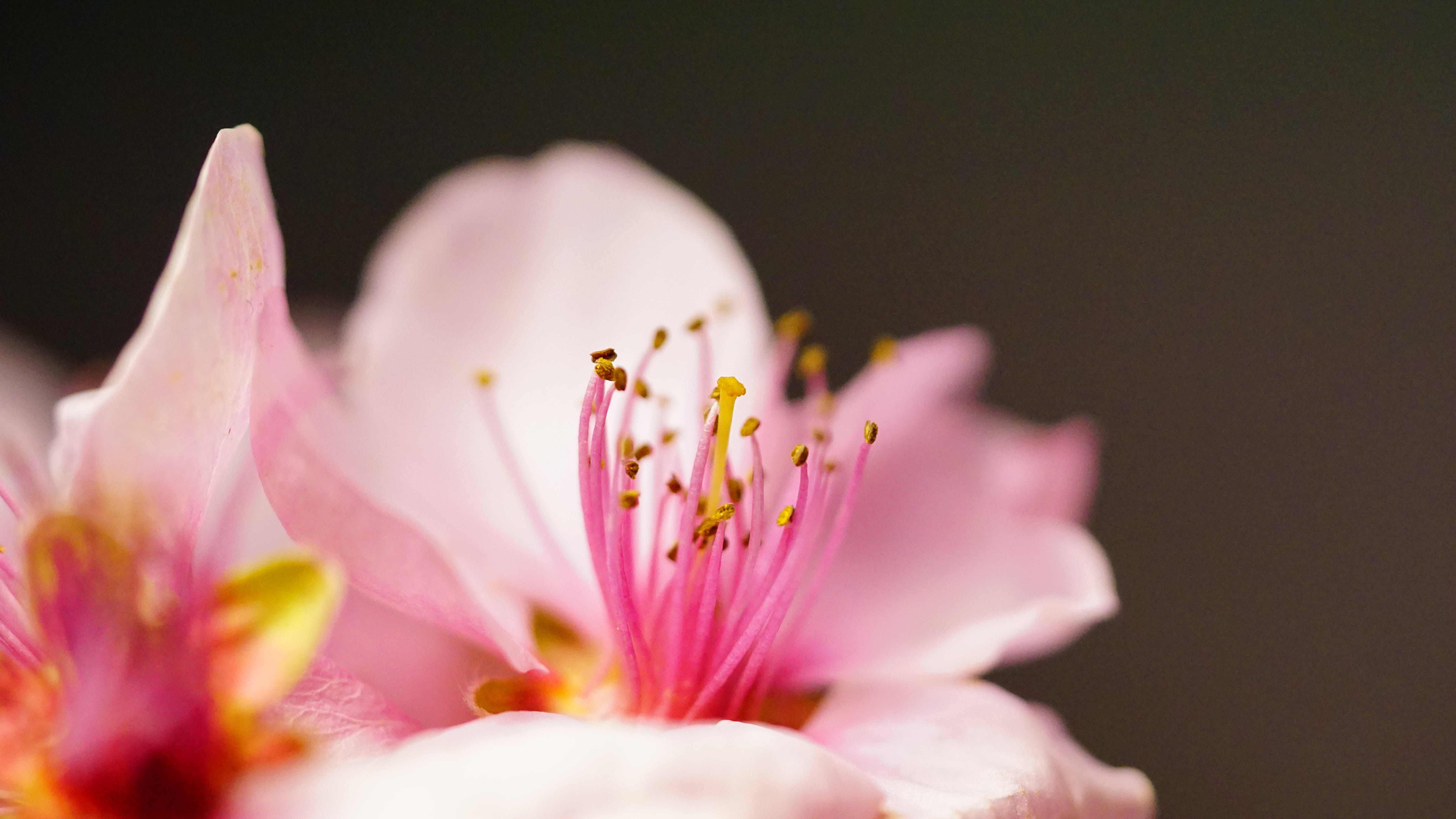 Macro Photography of Pink Flower