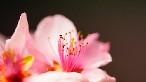 Immagine gratuita di bellezza, bellissimo, carino, concentrarsi