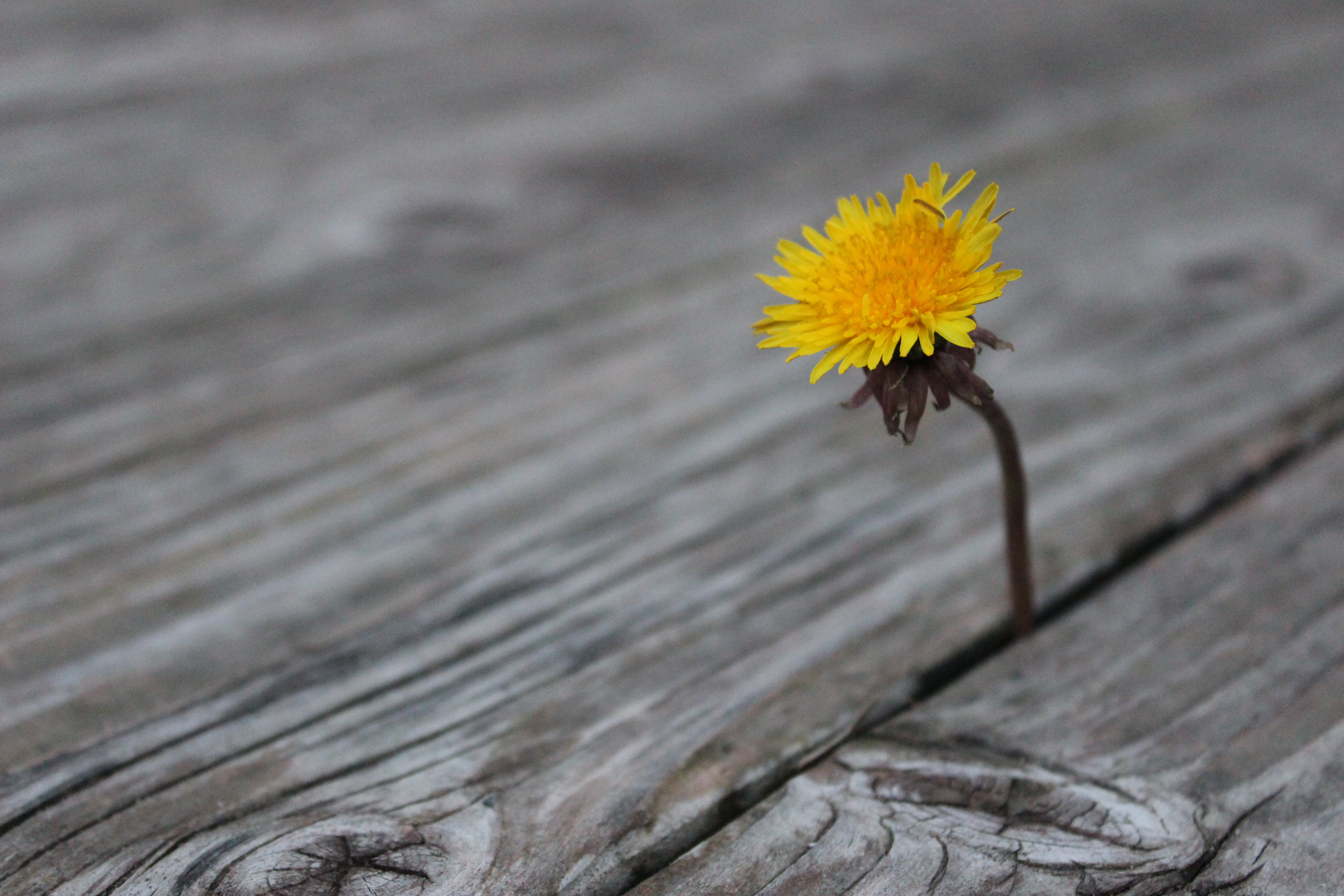 Δωρεάν στοκ φωτογραφιών με κίτρινη, λουλούδι, ξύλο, φωτεινά χρώματα