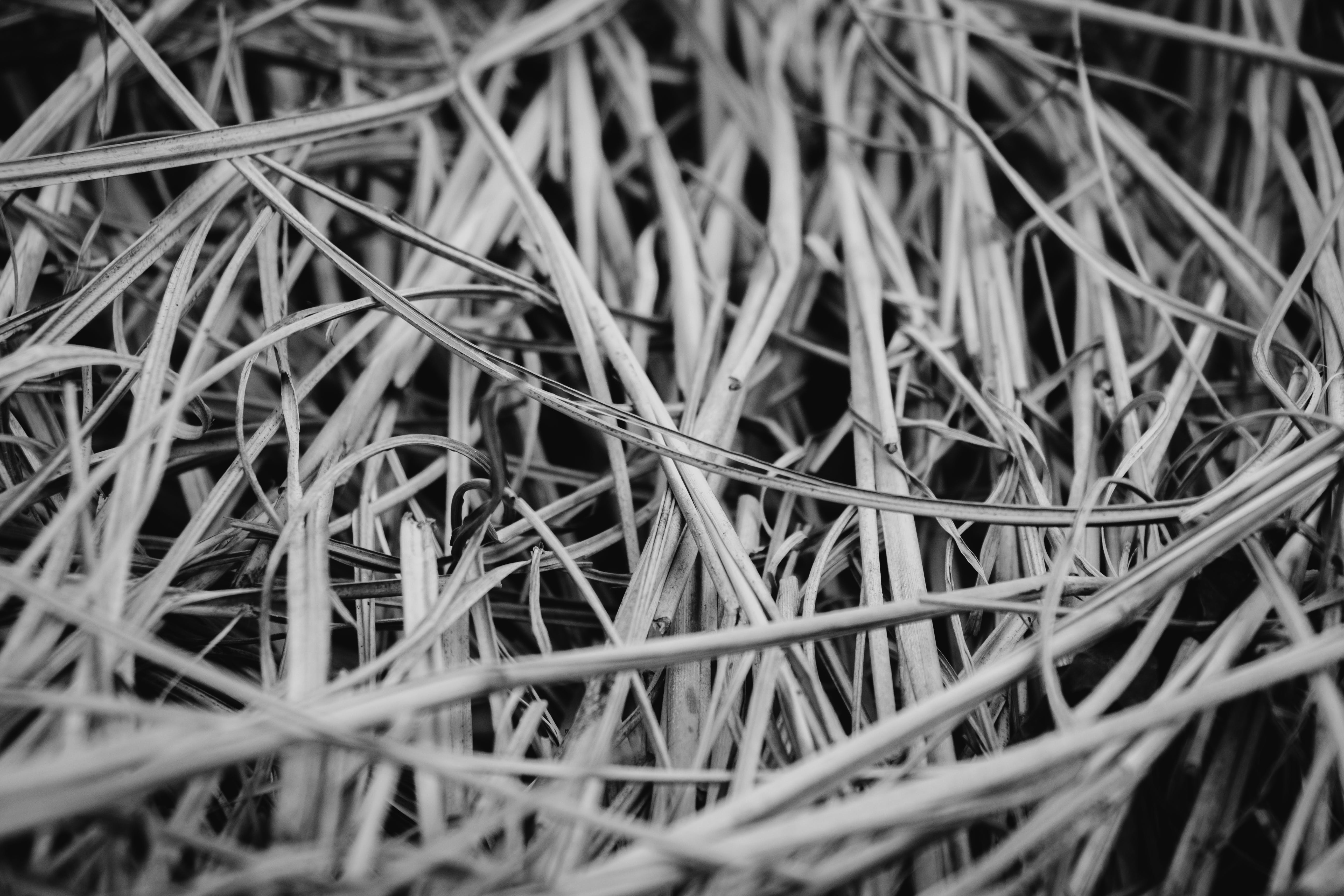 Gray Scale Photography of Grasses