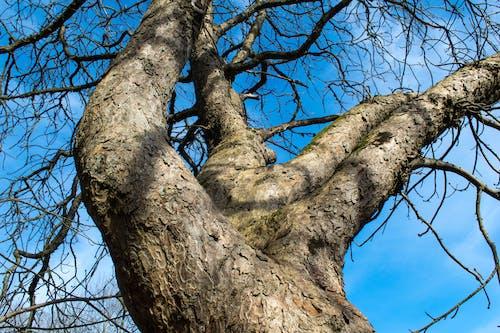 Free stock photo of sky, tree, wood