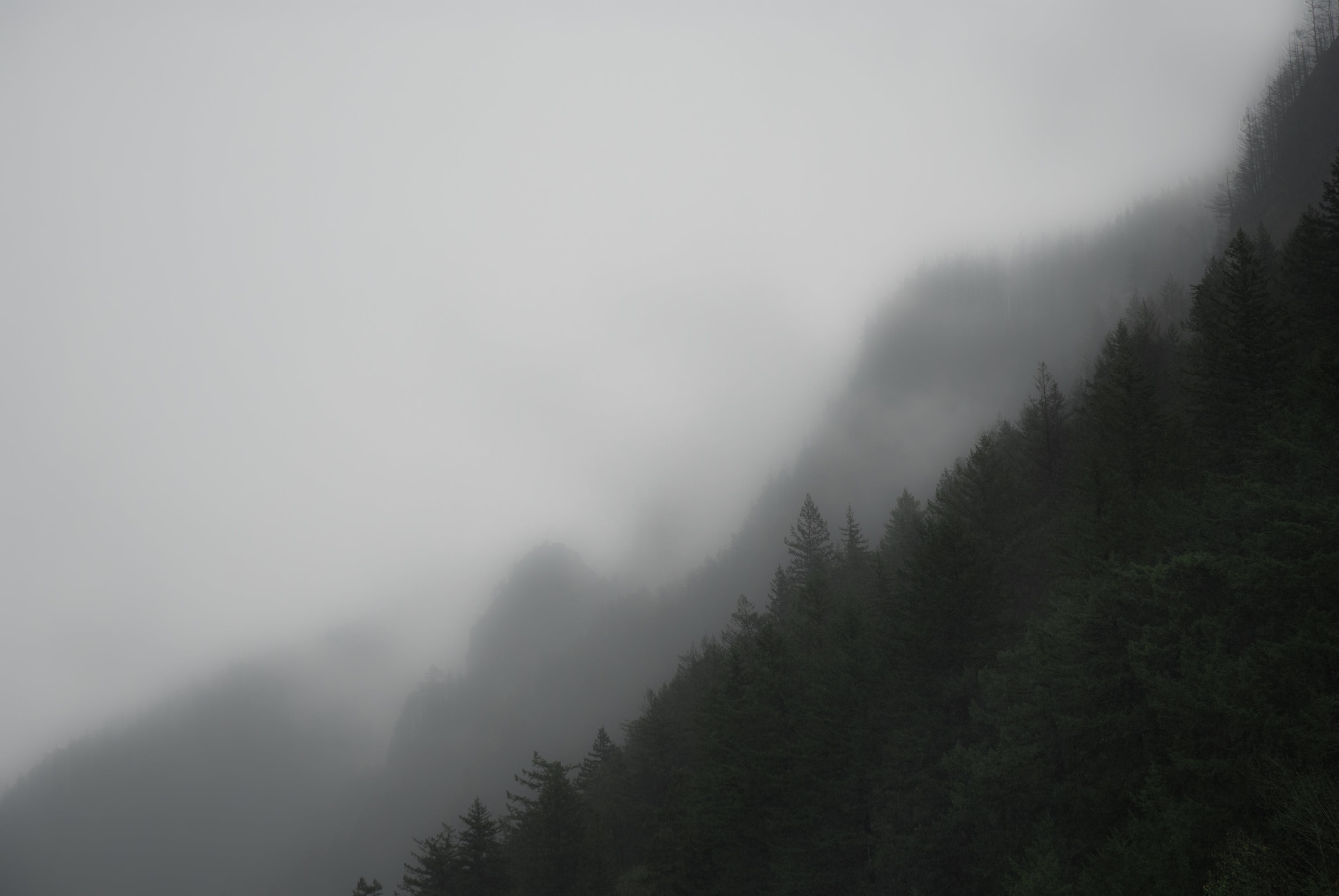 Gratis lagerfoto af bjerg, oregon, skov, tåget