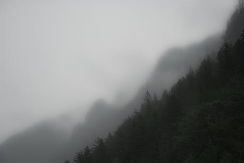 Free stock photo of fog, foggy, forest, mountain