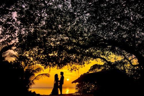 Безкоштовне стокове фото на тему «дерево, з підсвіткою, Захід сонця, легкий»