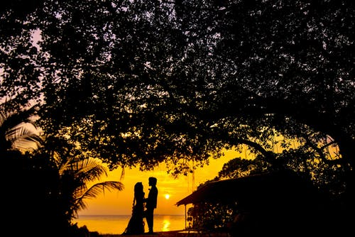 Imagine de stoc gratuită din apus, arbore, backlit, copac