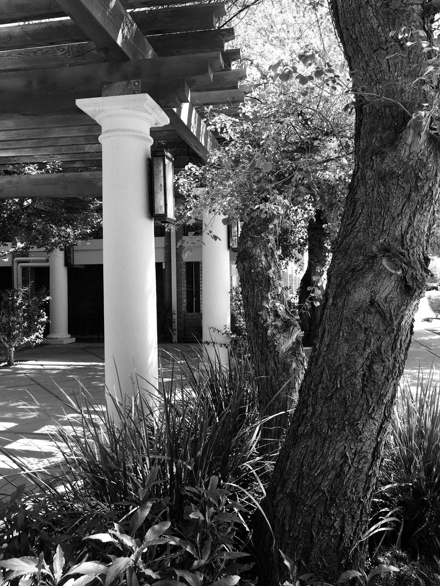 Free stock photo of black and white, patio, trees