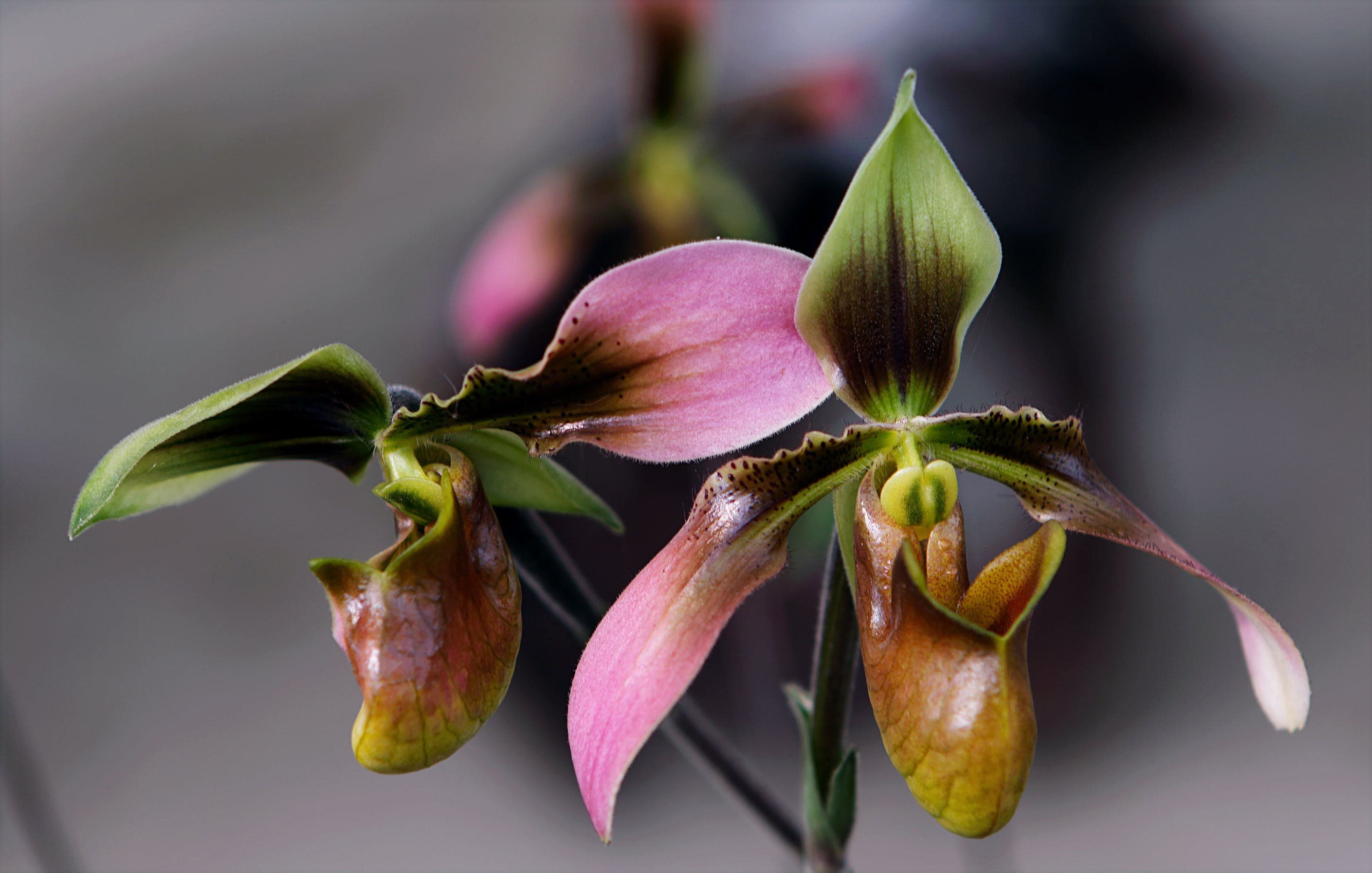 Brown, Pink, and Green Flowers