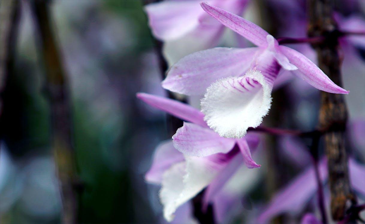 botanický, exotický, farebný