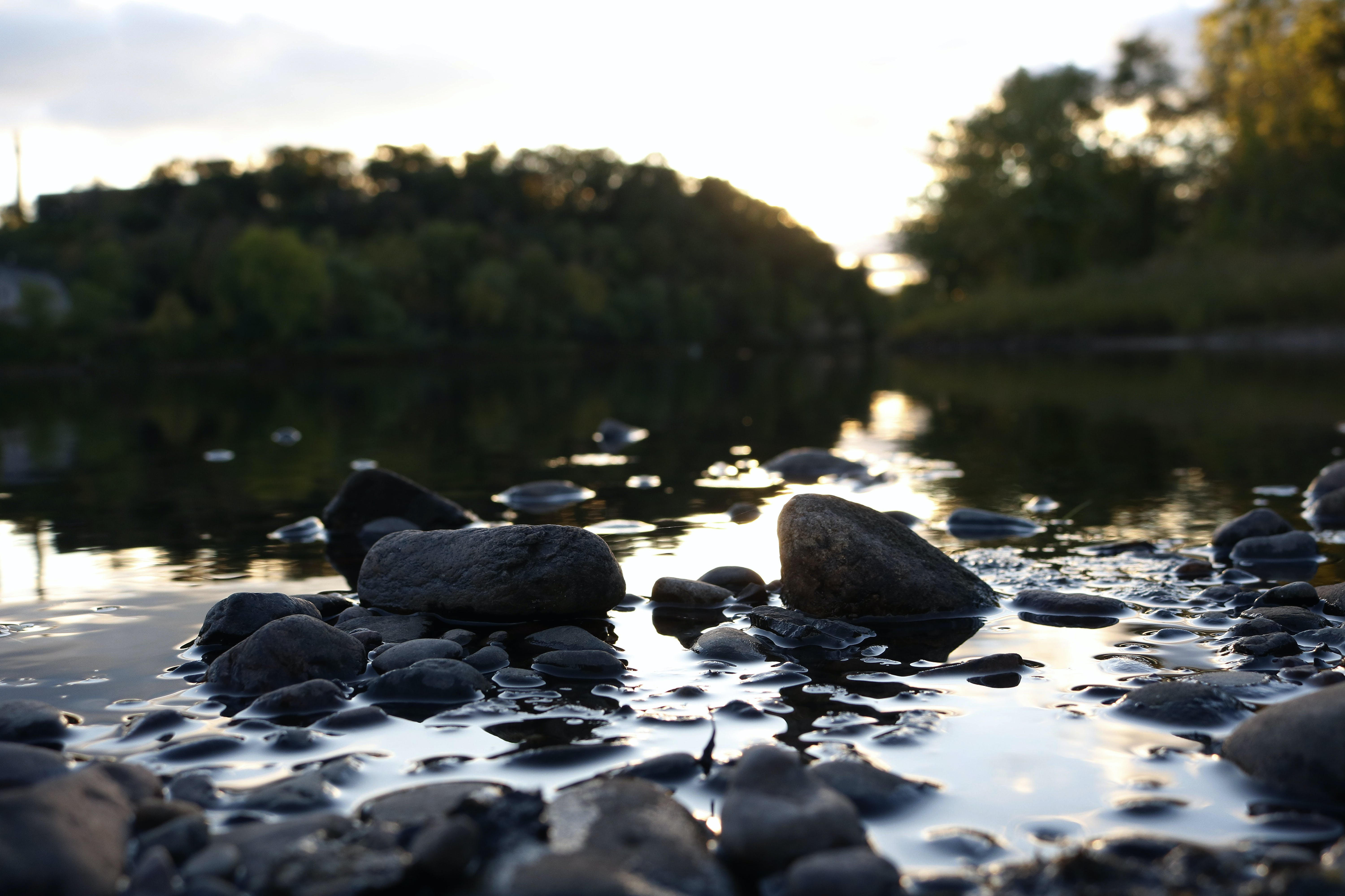 Free stock photo of nature, river