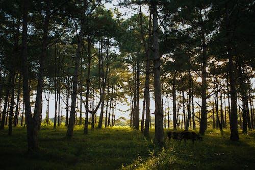 公園, 動物, 吃草, 天性 的 免费素材照片