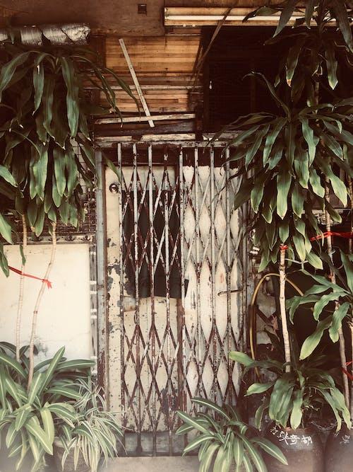Foto d'estoc gratuïta de hong kong life