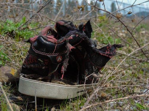 Ingyenes stockfotó cipő, elpusztított, fű, kopott témában