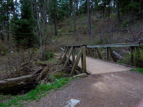 Ingyenes stockfotó erdő, híd, ösvény témában