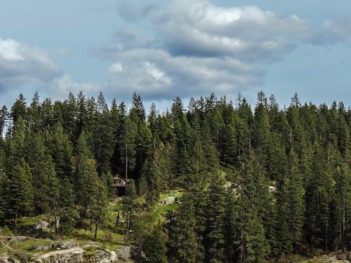 Ingyenes stockfotó ég, fák, felhők, fenyőfa témában