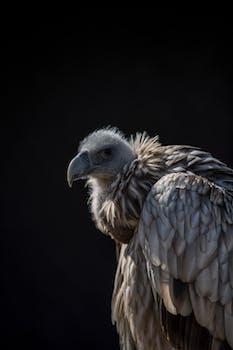 Closeup Photo of Vulture
