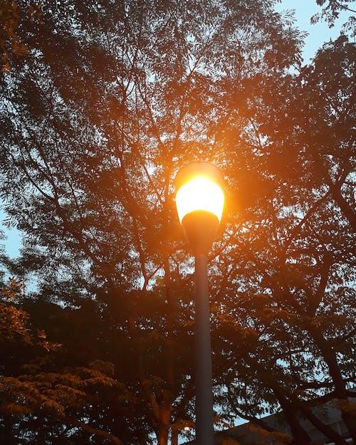 光, 夕方, 夕時, 夜の無料の写真素材