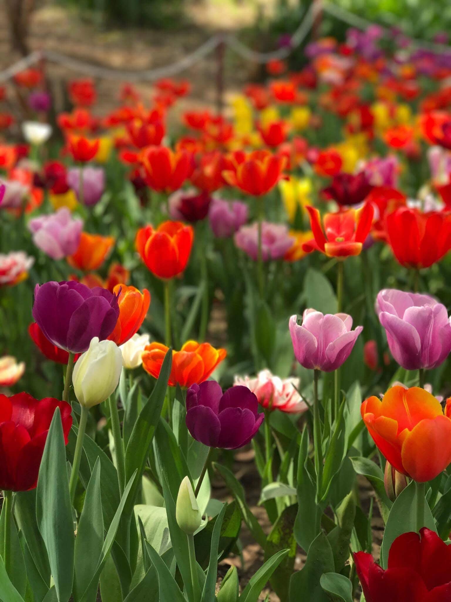 Gratis lagerfoto af blomster, farve, farverig, flora