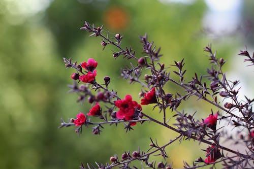 Gratis stockfoto met bloementuin, mooie bloemen, rode bloem, spin