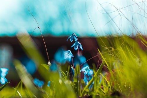 Gratis stockfoto met blauw, bloem, bloesem, close-up