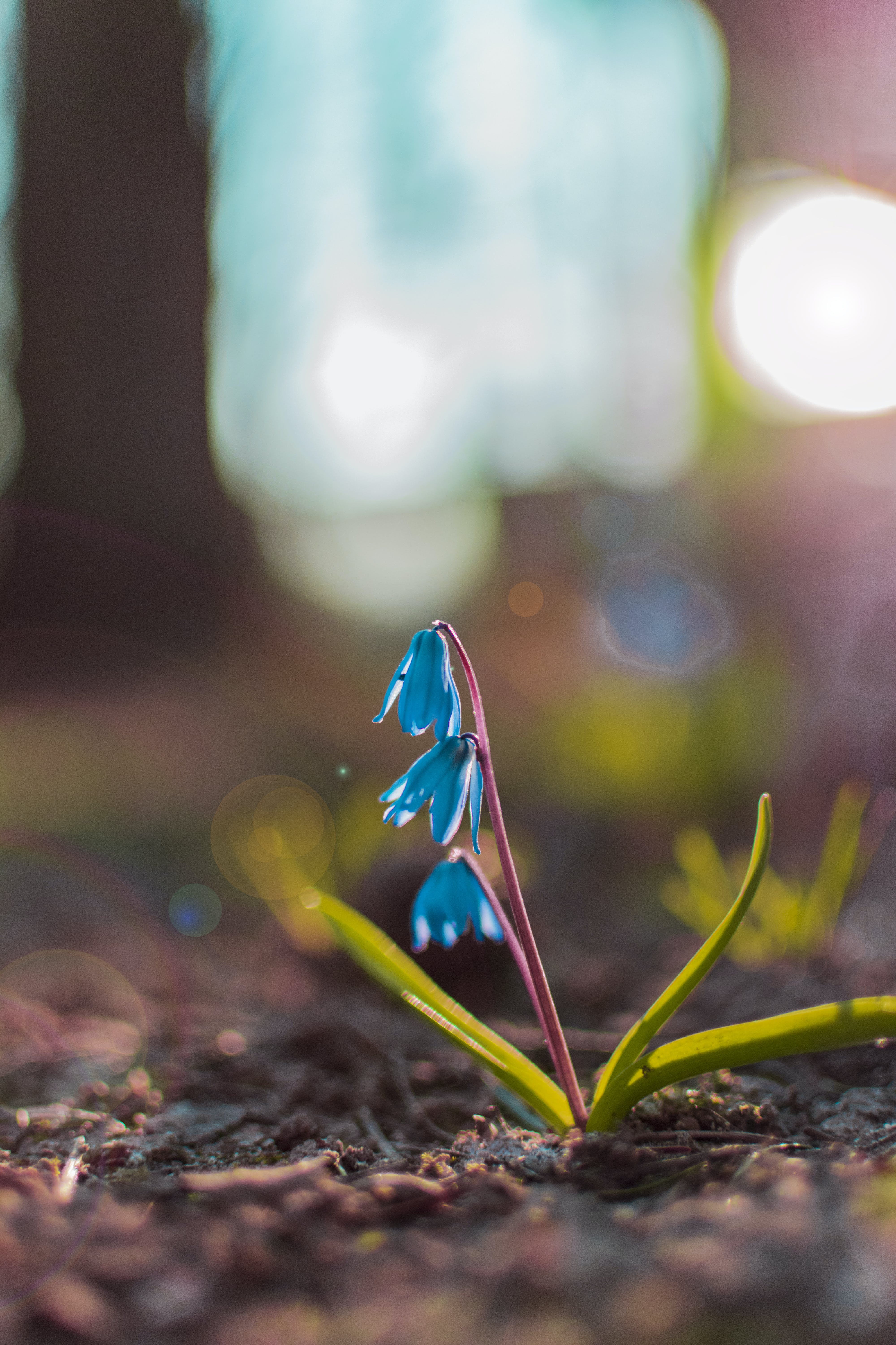 Close-up Photography of Blue Petaled Flowers