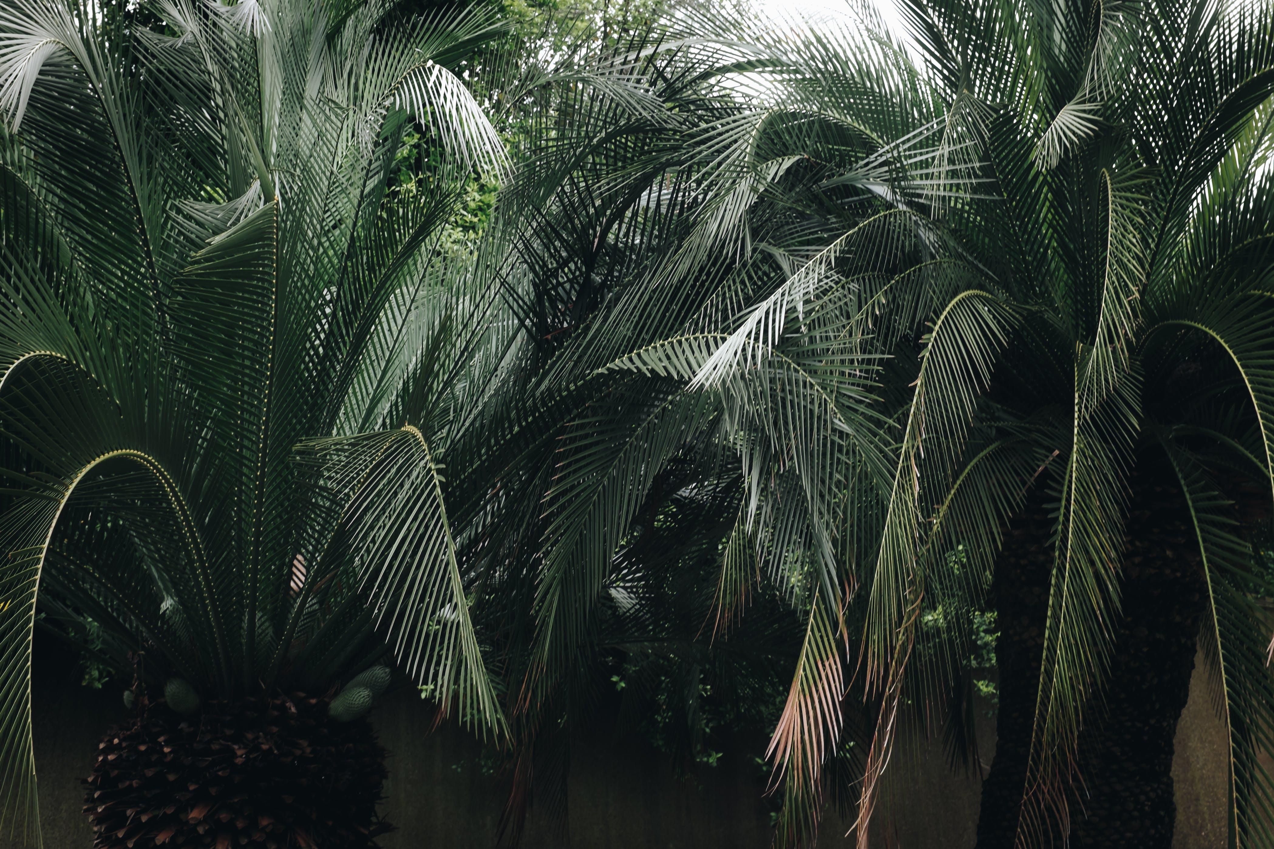 Green Leaf Palm Tree