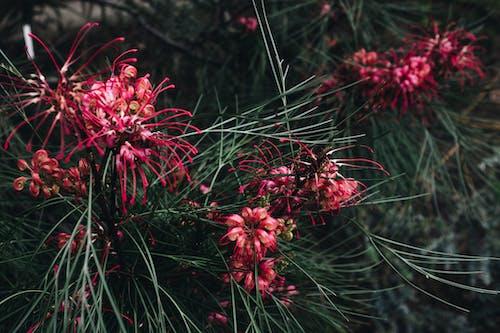 Ilmainen kuvapankkikuva tunnisteilla kasvikunta, kaunis, kevyt, kukinta